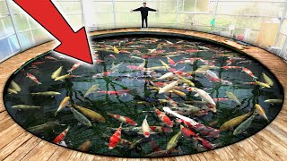 World's LARGEST Most Expensive Koi Fish!