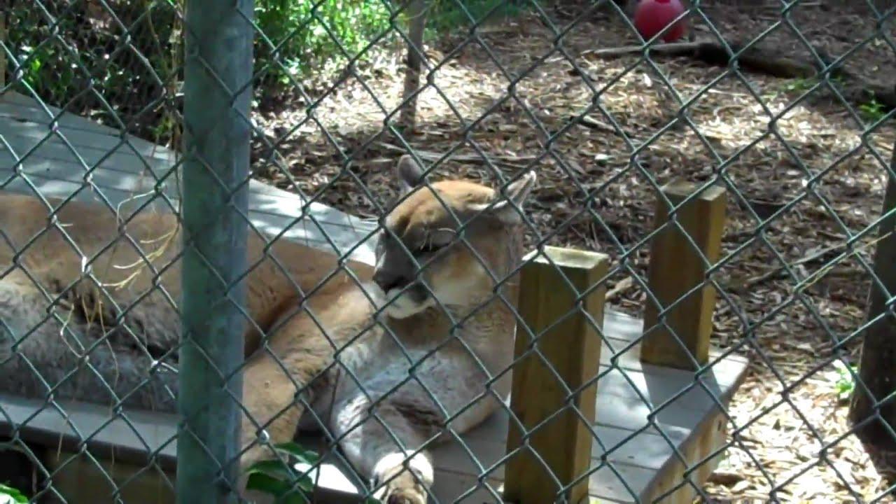 Busch Wildlife Sanctuary And Jupiter Lighthouse Youtube