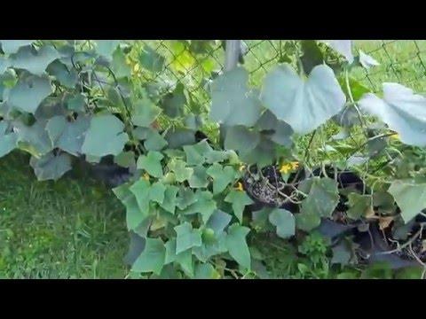Backyard Garden, Organic Garden, Container Gardening, Easy Gardening, Growing Plants From Seed,