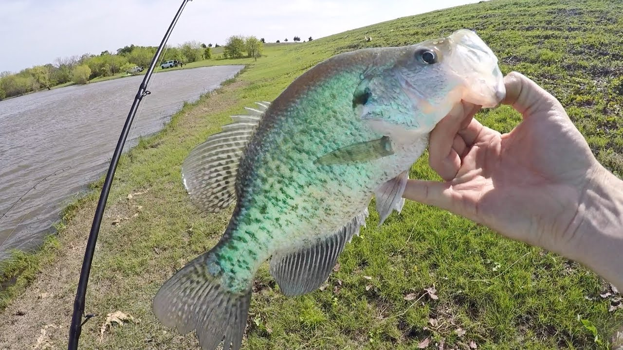 take-these-out-of-bass-ponds
