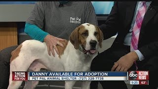 Pet of the week: Danny is big Hound dog with a heart of gold