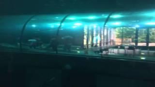 Keiko's Tank in Newport, OR