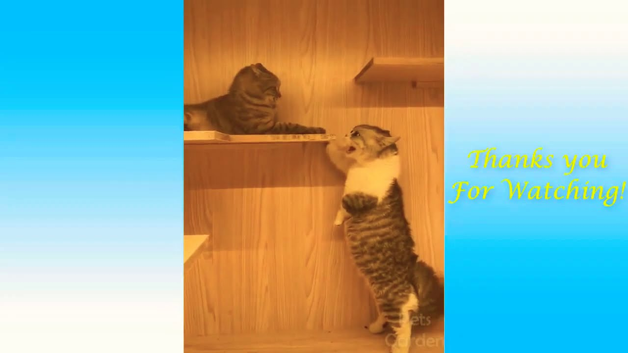 Very interesting and funny animals! - YouTube  |Very Interesting Animals