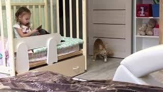 Дресированный мейн-кун Кекс! Рыжий кот! Приносит резинку