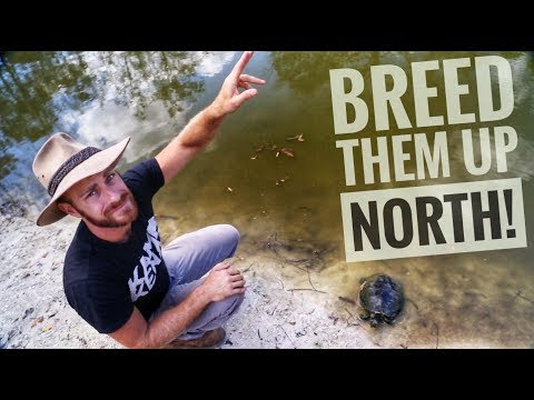 How to get Turtles to Breed