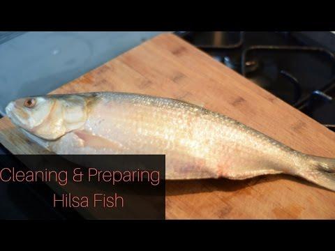 Cleaning and Preparing Bengali Hilsa (Ilish) Fish - ইলিশ মাছ পরিষ্কার করার প্রণালী