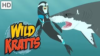 Wild Kratts 🦈🐊 Sharp Teeth   Kids Videos