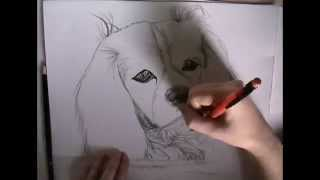 Drawing Time Lapse of a Cavalier King Charles Spaniel