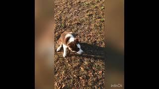Cooper DMWYD Trick Dog Novice Title 15 tricks