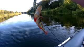 Река Воронеж, ловля щуки на спиннинг!!!