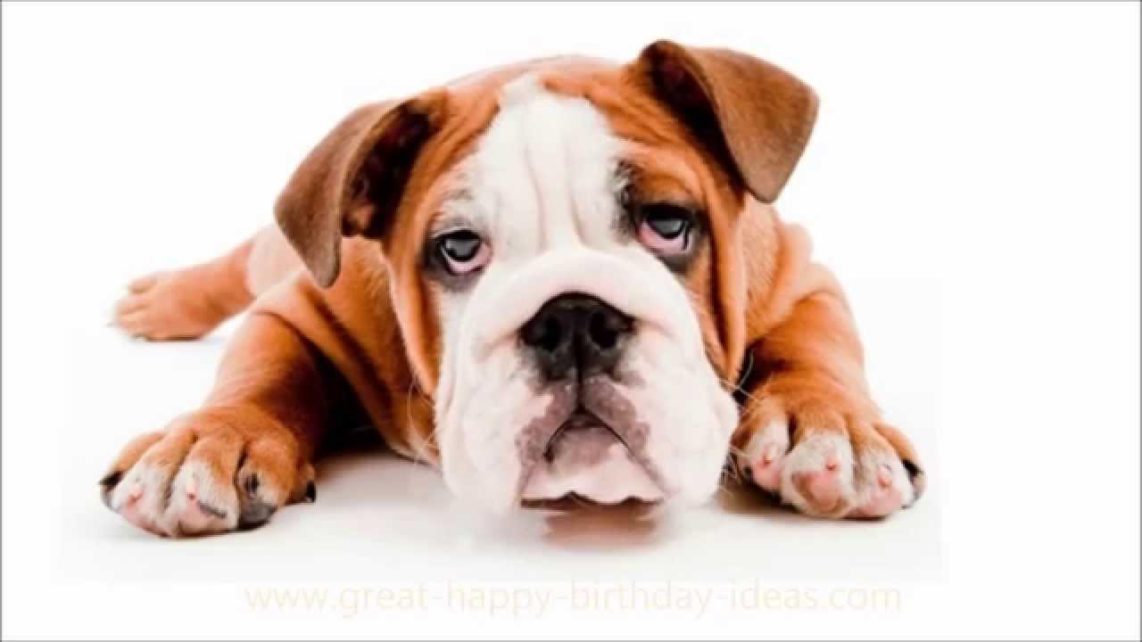 boldog sz let snapot droopy dog sings happy birthday
