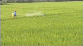 Tin Tức 24h Mới Nhất Hôm Nay :  Sâu bệnh trên lúa vụ mùa xuất hiện và lây lan nhanh ở Đồng Nai