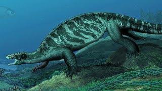 the-evolution-of-sea-turtles