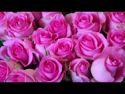 Fort Worth Florist Flower Shop Flower Delivery Same Day