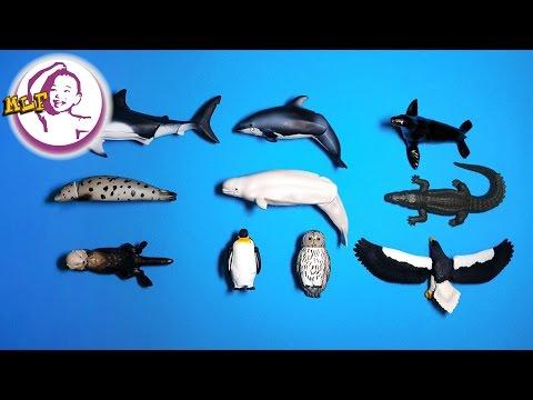 Học từ vựng - động vật biển (海洋动物)