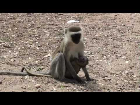 The wildlife in the Tsavo east National Park (Kenya)