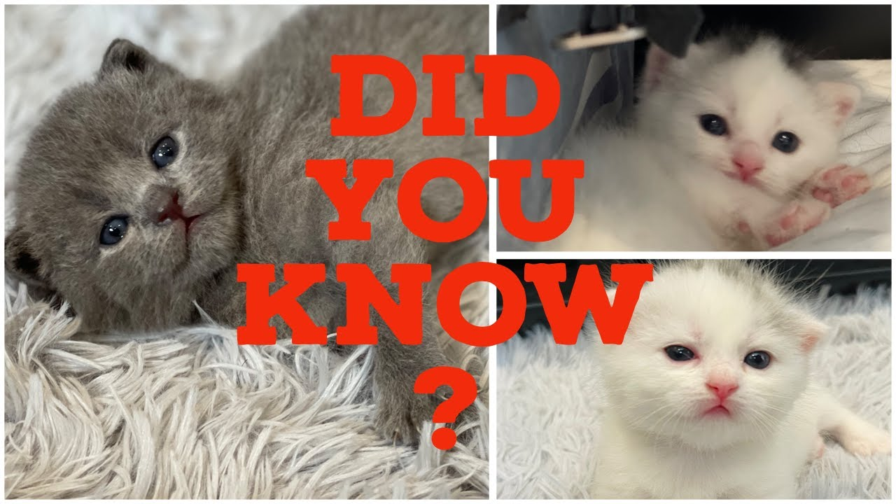 DID YOU KNOW SECRET LIFE OF KITTENS