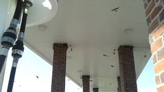 Barn Swallows? Building Nests At The Gas Station