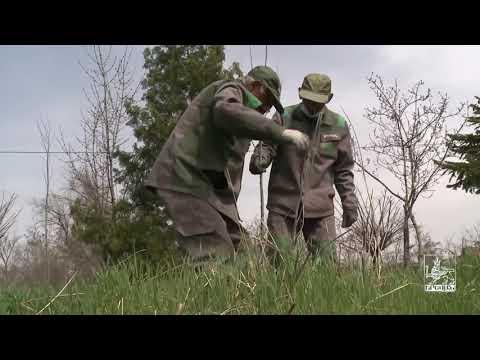 Ծառատունկ՝ Սարալանջում.մեկնարկել է տարածքի կանաչապատումը