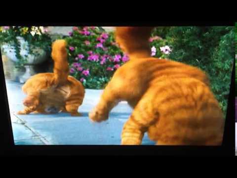 Garfield 2 A Tail Of Two Kitties: Garfield And Prince Shake