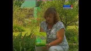 Как посадить травяной газон(Рассказ о том, как подобрать травочмесь и посеять газон., 2014-05-10T09:58:32.000Z)