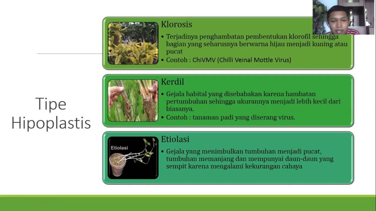 pikkelyes papillómák szája a genitális szemölcsök diagnózisa