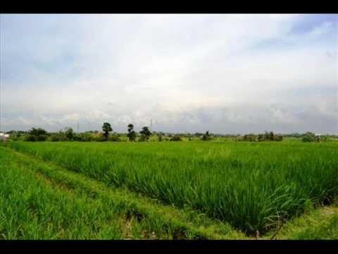 Bali land for sale in Canggu - TJCG004.wmv
