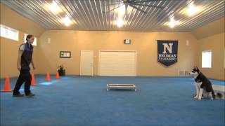 Paxson (siberian Husky) Dog Training Demonstration Minneapolis