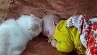 Котёнок будит ребёнка.