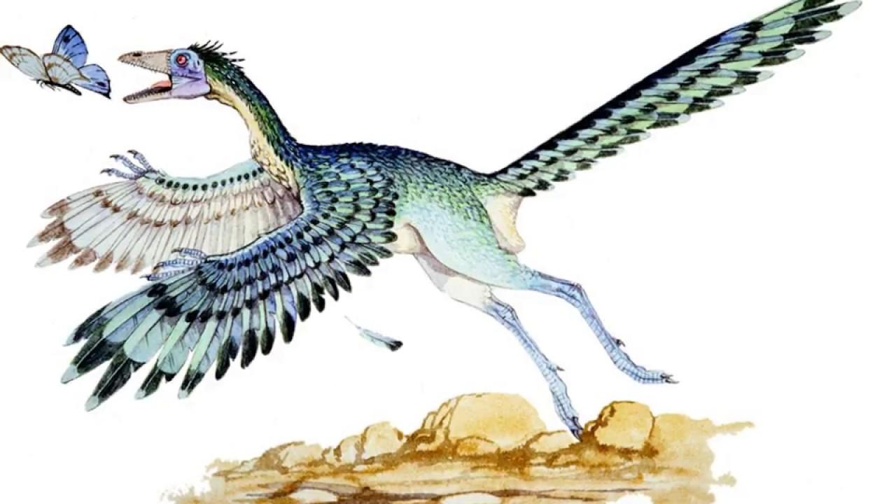 раннего картинка птицы археоптерикс различных