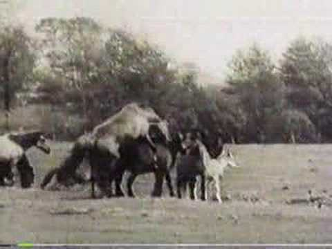Olde Horses Mating - YouTube