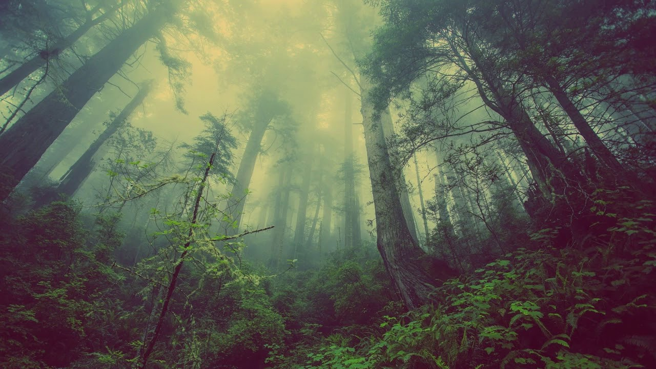 Tranquil Forest Meditation