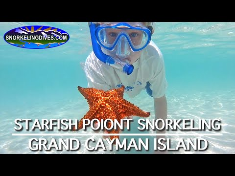 Starfish Point Snorkeling | Grand Cayman