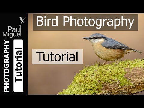 Bird Photography Tips And Tricks