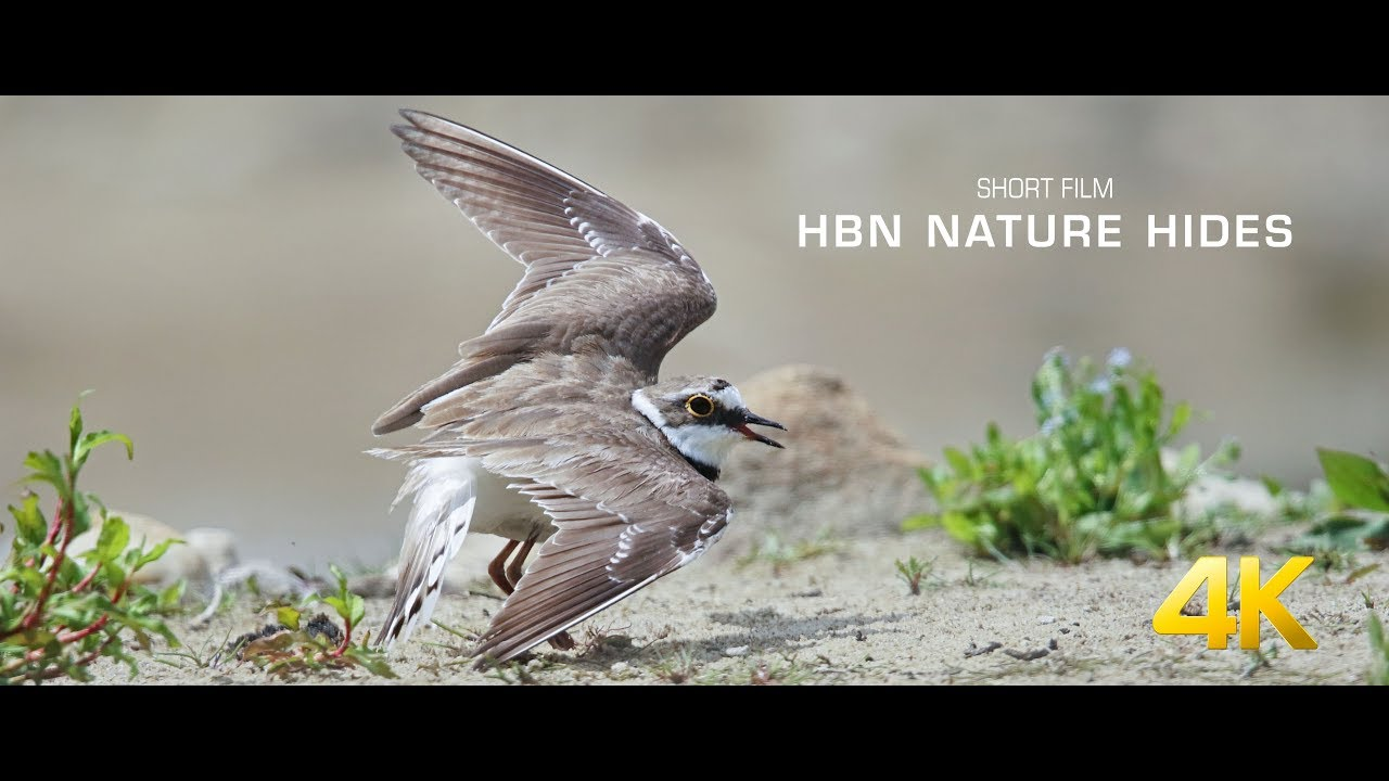 HBN Nature Hide - short film 4K