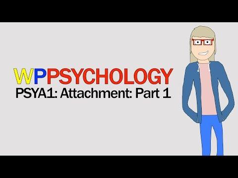 Explanations | Attachment | Psychology