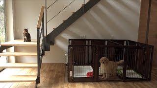 犬のケージに入る好奇心旺盛な猫 ルル