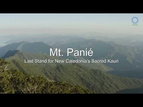Trailer: Mt. Panié - Last Stand For New Caledonia's Sacred Kauri