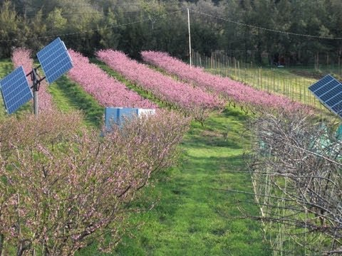 Organic, no-till  agroecolgy/permaculture farm suppresses insect and disease pests.