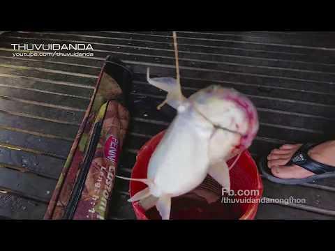 Mồi Cực Nhạy Câu Cá Vồ Đém L Tổ Đãi 3 Rùa L River Fish Hunting