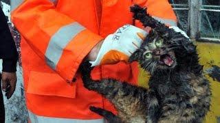 Türklerde vs Yabancılarda Kedi Kurtarma