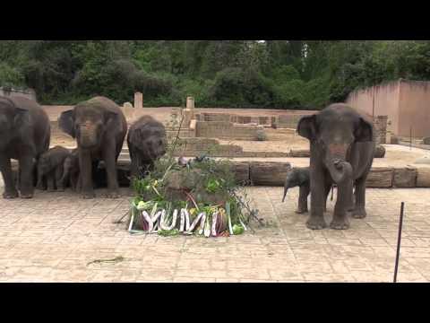 Elefantentaufe im Erlebnis-Zoo Hannover