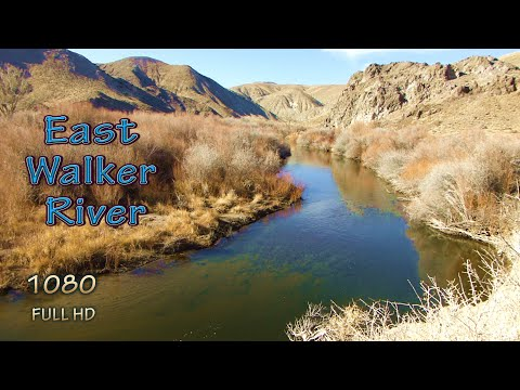 Backpack Hiking Nevada Fishing East Walker River And Wilderness Camping With My Backcountry Dog