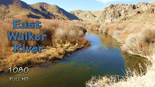"""East Walker River Fishing Nevada Backpack Camping with my Dog East of """"The Elbow"""" Remote Places"""
