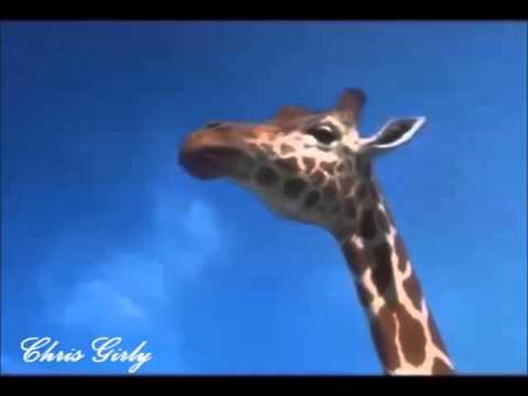 Der Hessische Schlumpf Was Eine Hitze Youtube