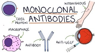 How do monoclonal antibodies work? Rituximab, infliximab, adalimumab and others