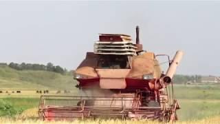 Колос Ск-6 в поле , уборочная 2018. Kolos SK-6 in the field, the harvest of 2018.