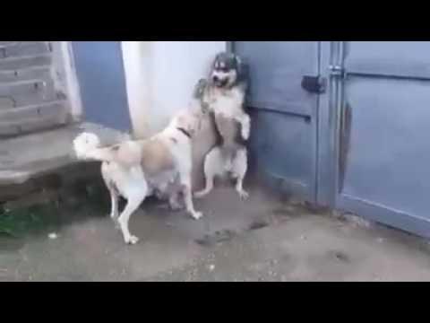 Angry Dog Mom
