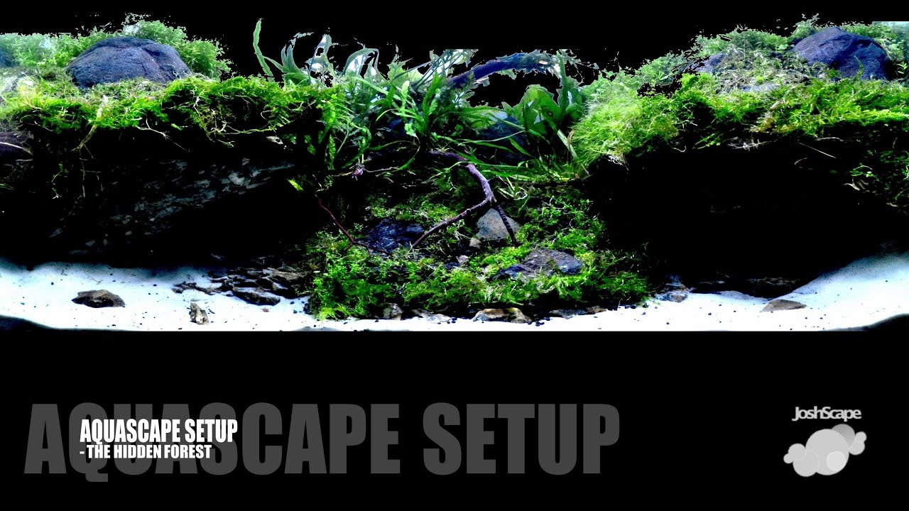 Aquascape Setup   The Hidden Forest   YouTube