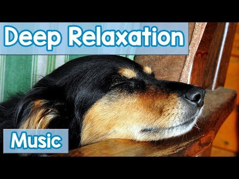 15 Hours of Deep Relaxation Music for Dogs! Music to Relax Y